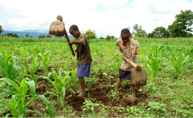 agricultura_de_subsistencia