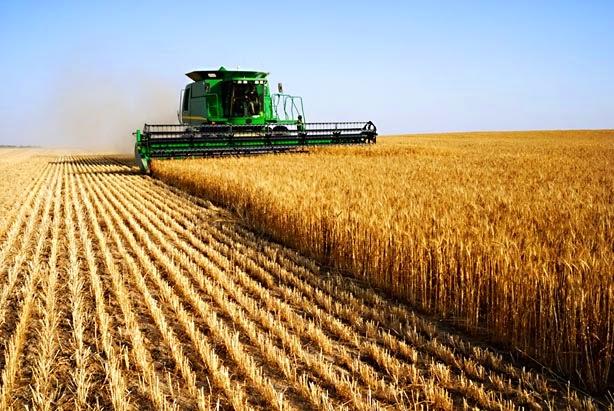 agricultura de mercado, latifundio