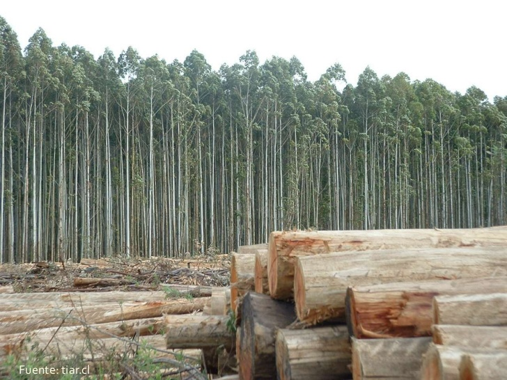 explotacin-forestal-3-728