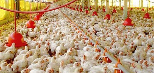 jornada-de-capacitacic3b3n-en-avicultura